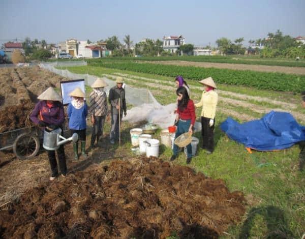 Chế phẩm vi sinh giúp cây trồng tăng năng suất