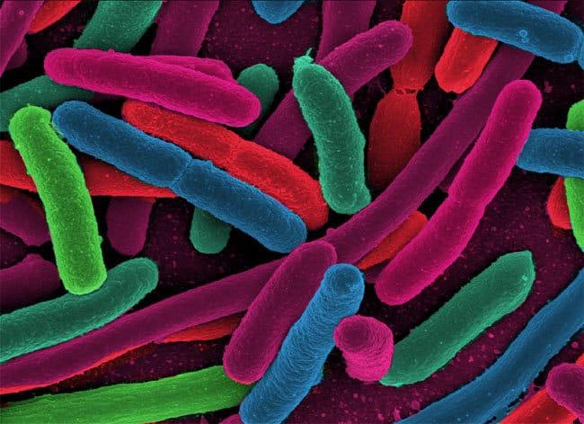Bacteria 4