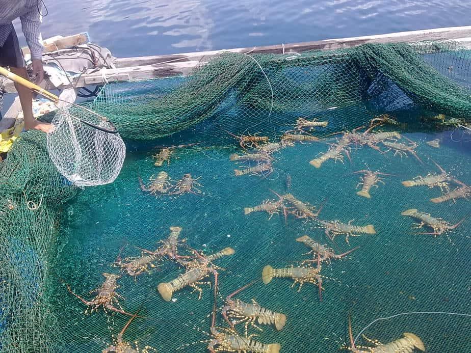 Chế phẩm sinh học ứng dụng trong Thủy sản