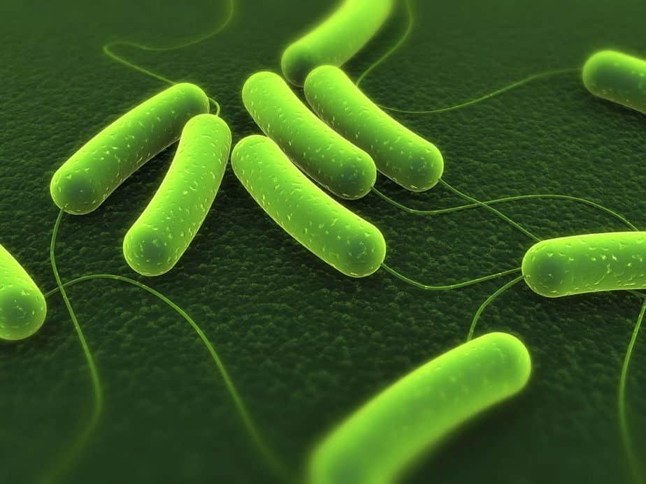 Tổng quan về vi khuẩn - Cấu trúc và chức năng của tế bào vi khuẩn