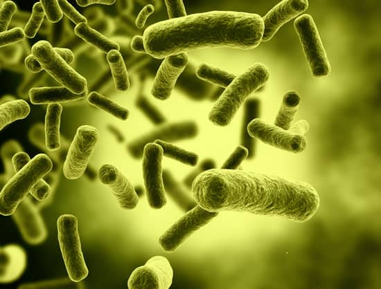 Lactic Bacteria