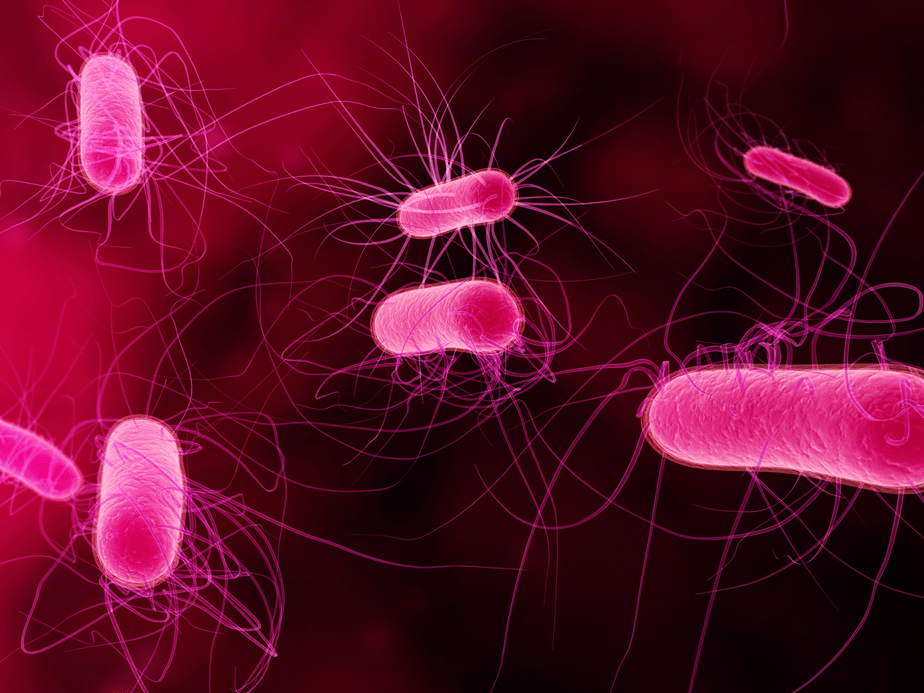 Bacteria 5