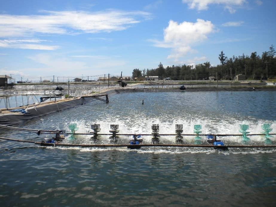 Nghiên cứu chủng vi sinh vật xử lý nước thải Thủy sản