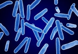 Azotobacter vinelandii - NBRC 13581