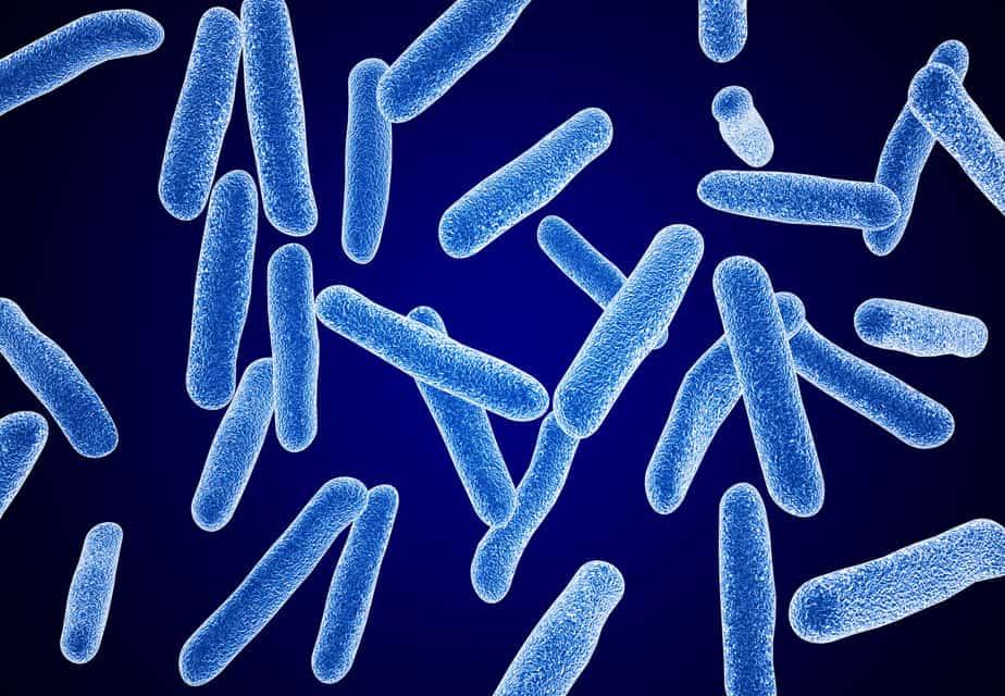 Bacteria 10