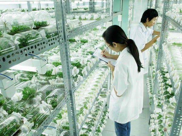 Công bố quy hoạch khu nông nghiệp sinh thái ứng dụng công nghệ cao