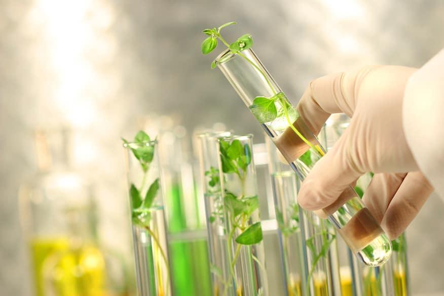 Các lĩnh vực ứng dụng Công nghệ sinh học
