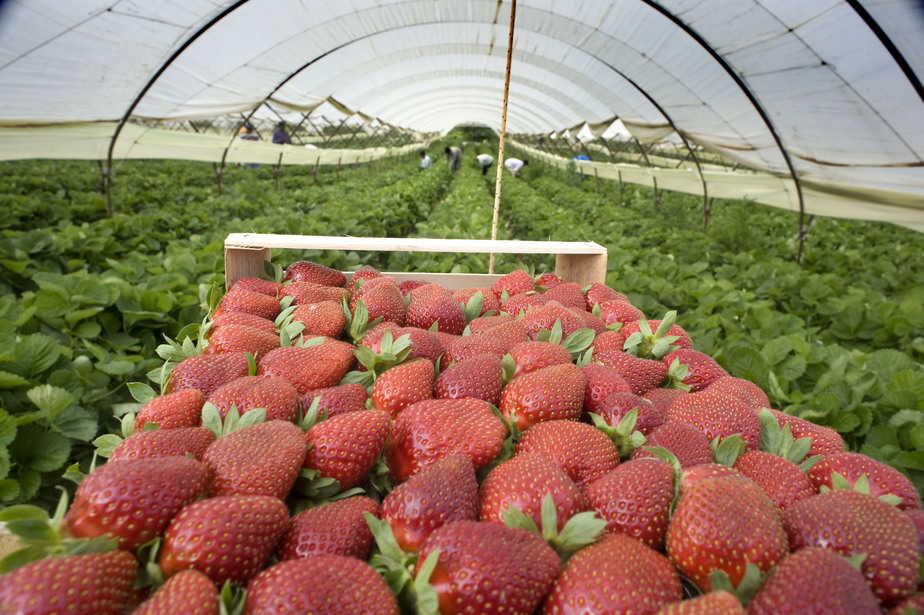 12 cách người Israel thay đổi nền nông nghiệp thế giới