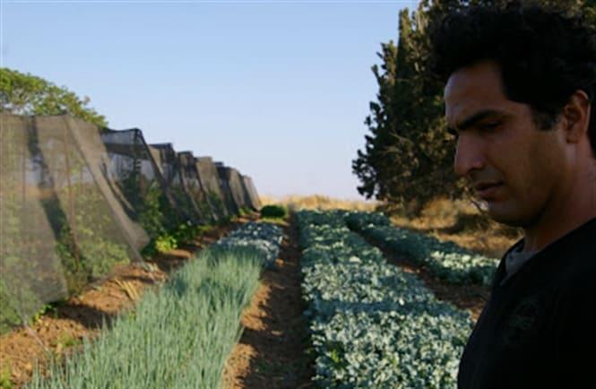 Boaz Havivian tại cánh đồng nhà mình