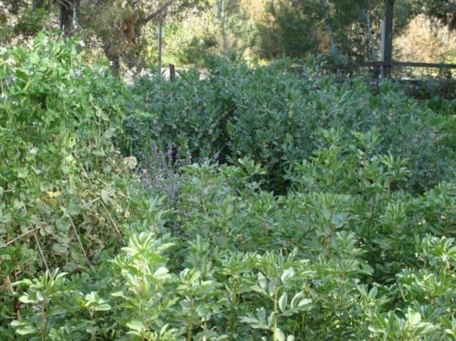 Vườn rau quả hữu cơ của Maggie Rosenberg ở Nataf