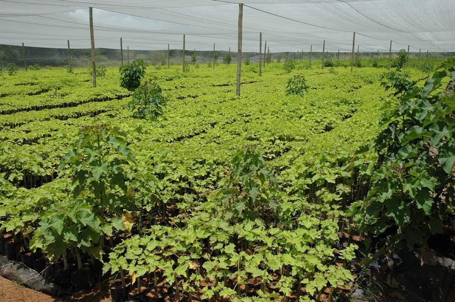 những điều khó tin về nền nông nghiệp Israel