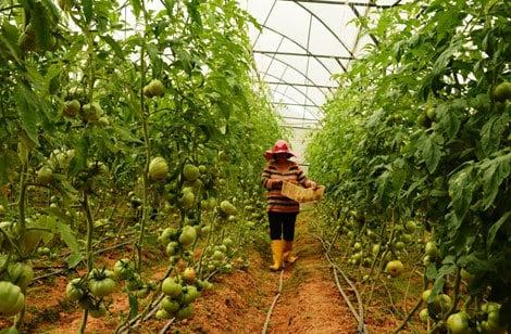Lợi nhuận khủng từ nông nghiệp thông minh 2