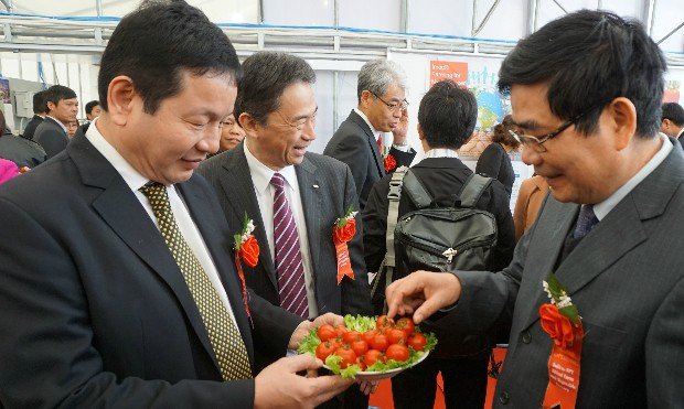 Nông nghiệp số - Cà chua có độ ngọt tự nhiên và hàm lượng dinh dưỡng rất cao