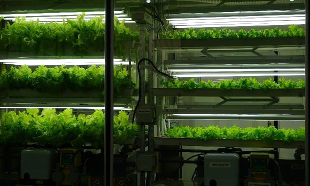 FPT hiện thực hóa giấc mơ Nông nghiệp số
