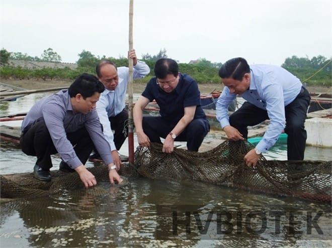 Nguyên nhân gây ra hiện tượng cá chết hàng loạt tại miền Trung