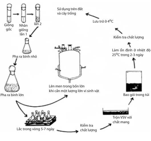 sản xuất phân bón vi sinh, chủng vi sinh, chủng chuẩn atcc, chủng giống chuẩn vi sinh vật