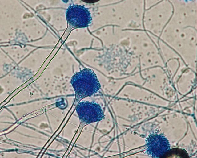 nấm, chế phẩm sinh học, chế phẩm vi sinh, Aspergillus, Aspergillus caesiellus