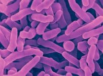 Propionibacterium freudenreichii, chung vi sinh, chung chuan ATCC