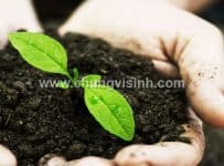 phân vi sinh là gì, phân bón vi sinh, chế phẩm sinh học, thuốc diệt cỏ từ thảo dược