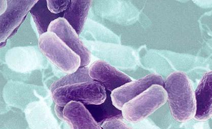 Vi khuẩn cố định đạm Azotobacter