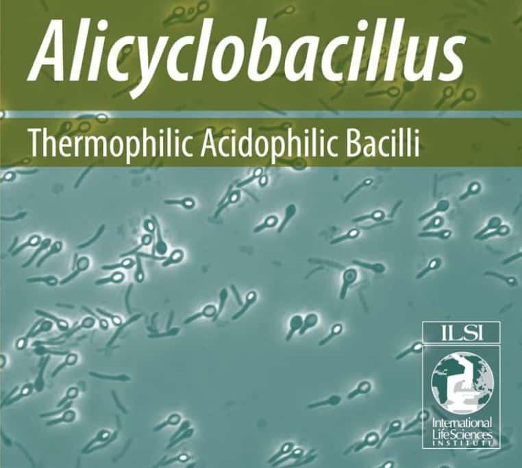 Alicyclobacillus acidiphilus
